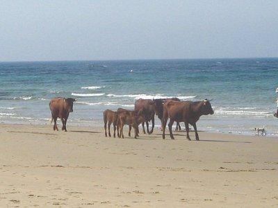 Příroda v Tarifě