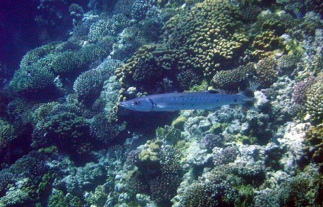 Potápění v Hurghadě (2003)