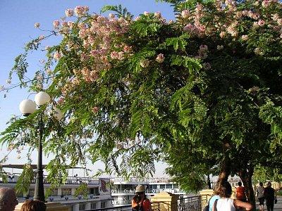 Nábřeží Nilu (nahrál: admin)