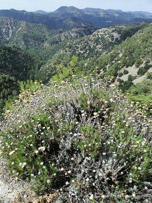 pohoří Troodos (nahrál: vsv)
