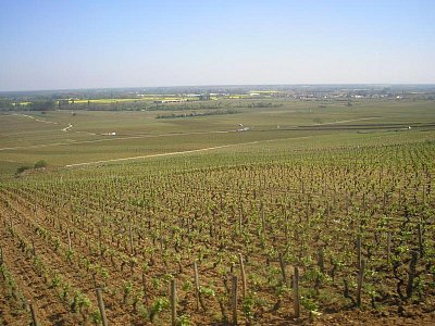 burgundské vinice (u Auxerre) (nahrál: Lucie Tichá)