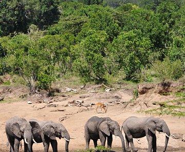 Keňa - Masai Mara leden 2011