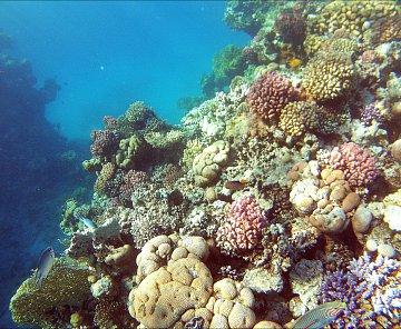 El Faraana Reef